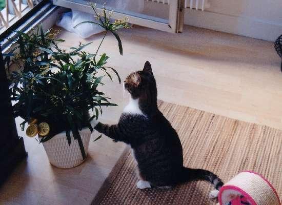 Conseils infos chat d 39 appartement plantes dangereuses pour votre chat - Plante non toxique pour chat ...